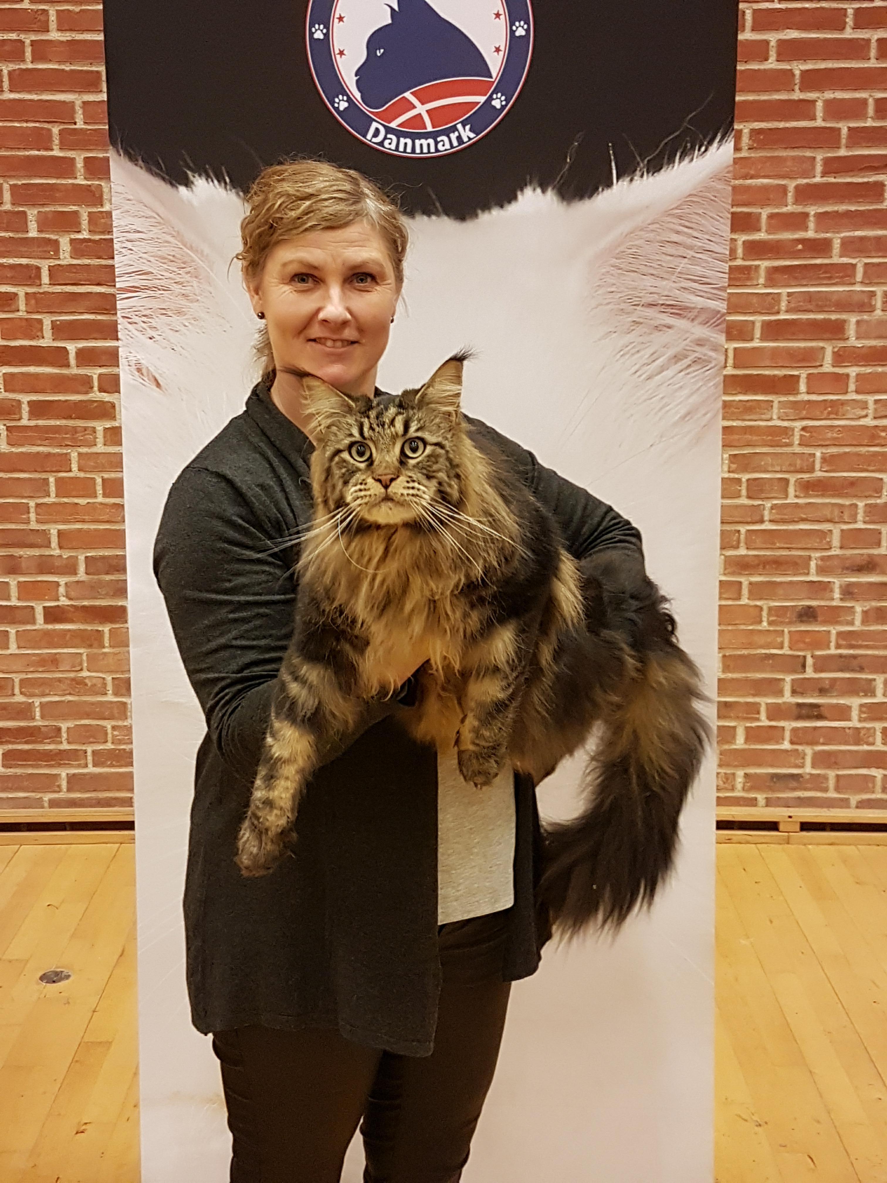 ALBERTSLUND IP Jedocats Ferdinand ejet af Susan & Claus Stryg hos Waltrout Sattler