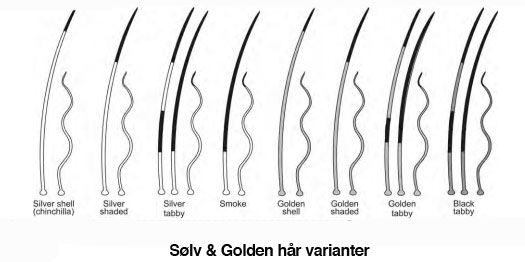 sølv og golden varianter